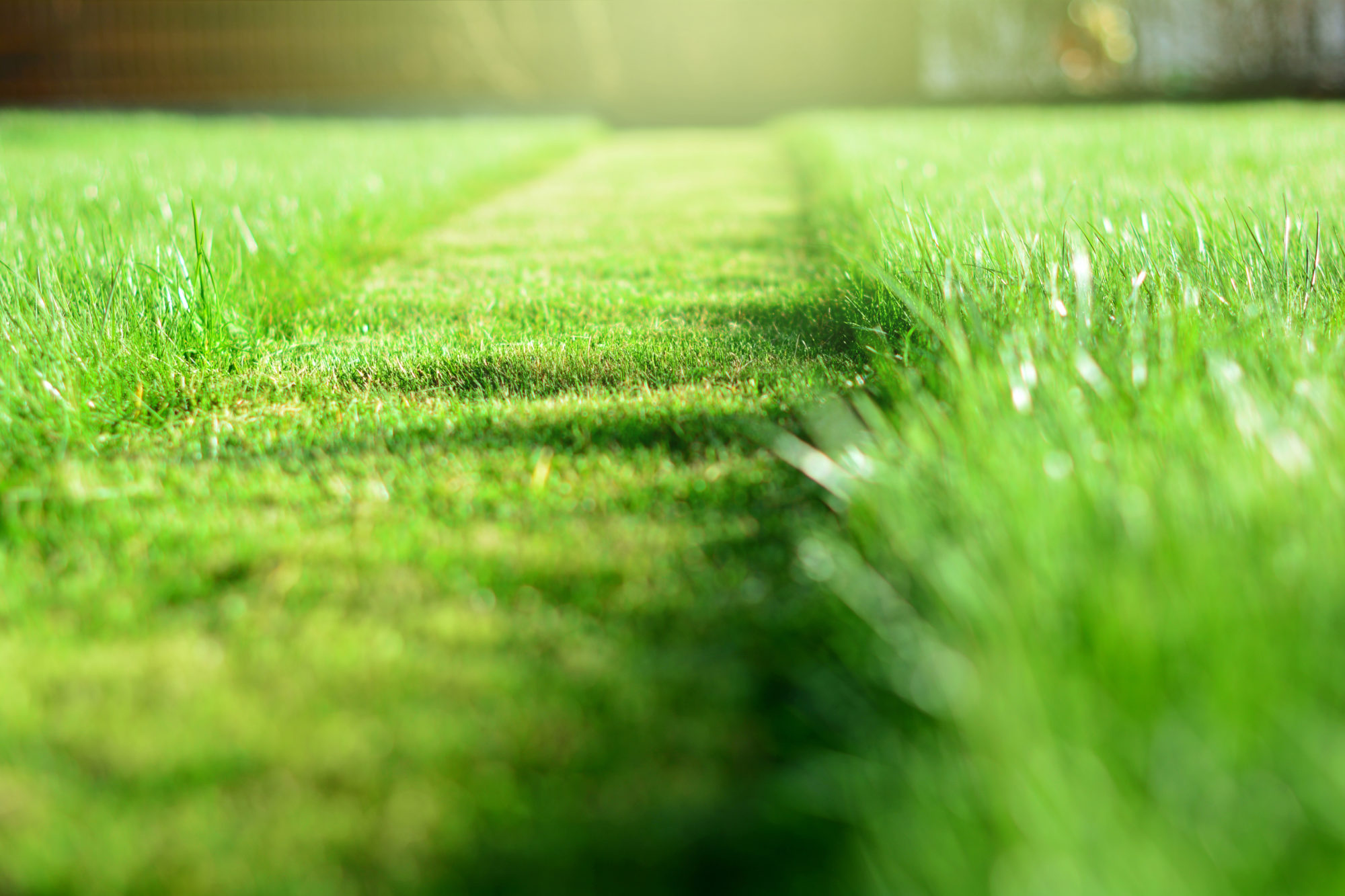 this is a photo of Cut strip of green grass. Mowing the lawn. Selective focus, new england lawn care, western ma