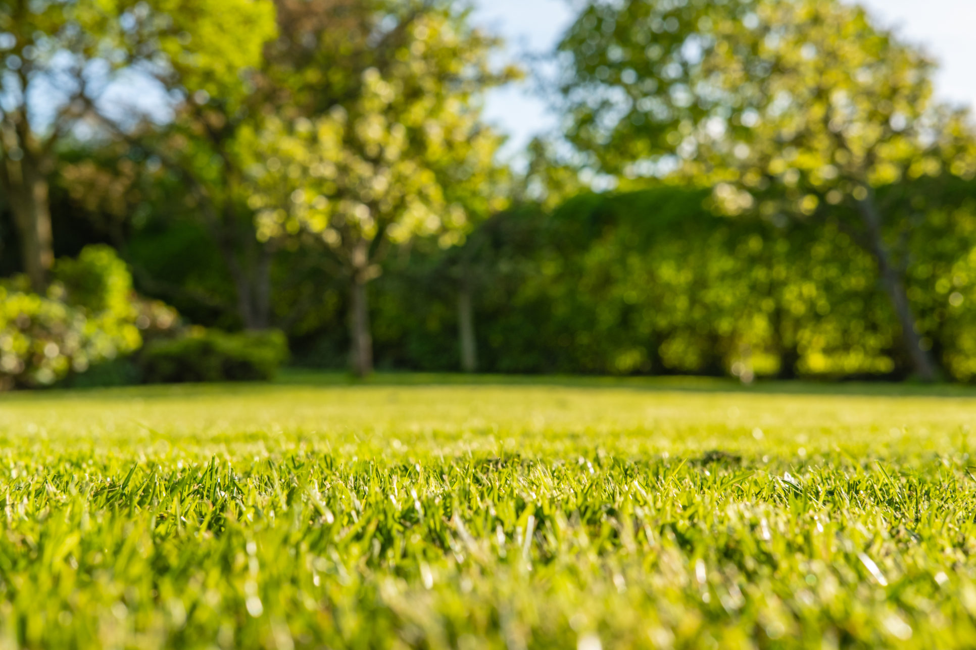 this is a photo of a nicely cut lawn with blurry trees in the background, western ma, westfield ma