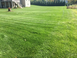 this is a photo of a lawn after being mowed in a suburban neighborhood, crabgrass control, western ma, westfield ma