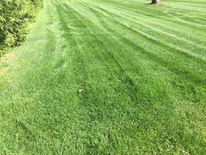 this is a photo of a lawn after being mowed, nutsedge control, western ma, westfield ma
