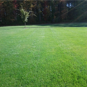 this is a photo of an aeration on a lawn in westfield ma, new england lawn care, organic lawn care