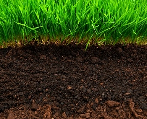a photo of healthy green grass and soil, western ma, new england lawn care