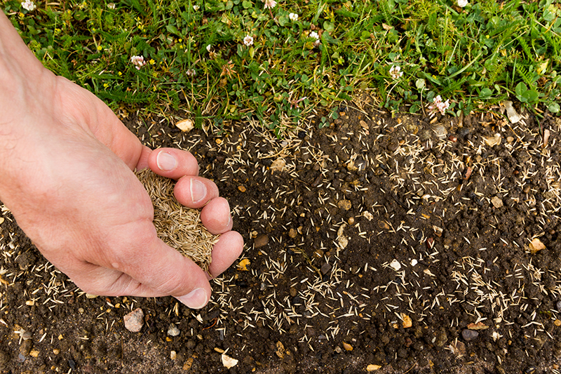 this is a photo of a hand spreading seed onto soil