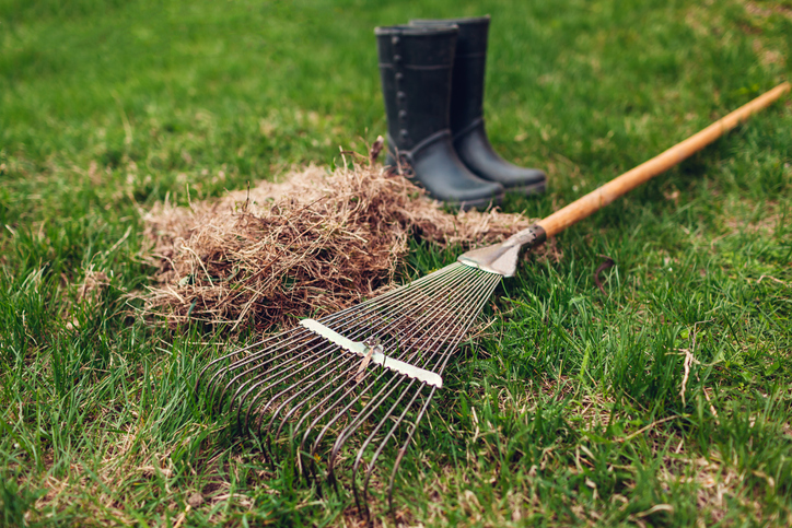 This Is A Photo Of A Metal Rake Cleaning Up Dry Grass With Worker Boots In The Background
