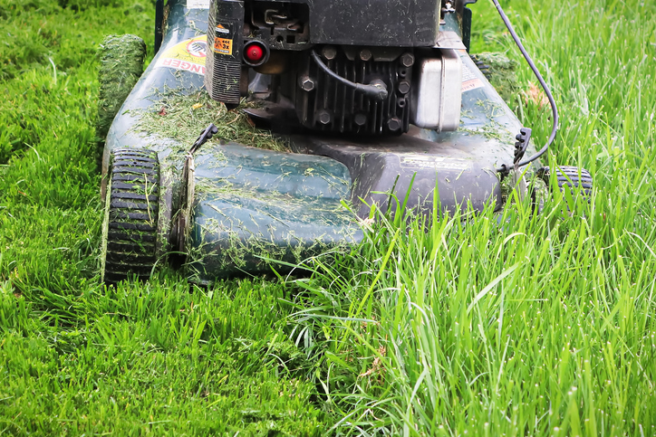 This Is A Close Up Photo Of A Push Lawn Mower Mowing Long Grass