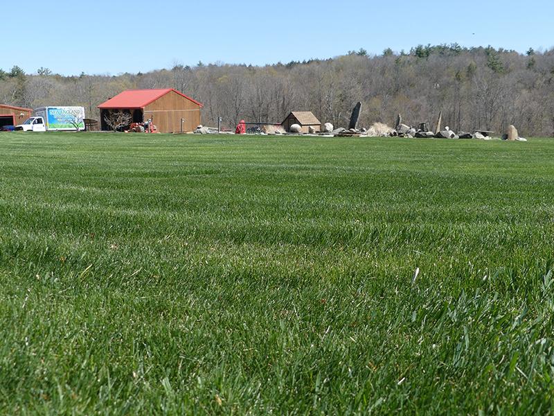 Wide Shot Of Fertilized Lawn On Farm Land, Grass Being Fertilized By A Fertilization Truck